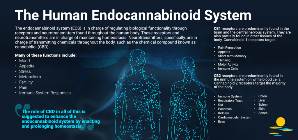Infographic of the Human Endocannabinoid System.