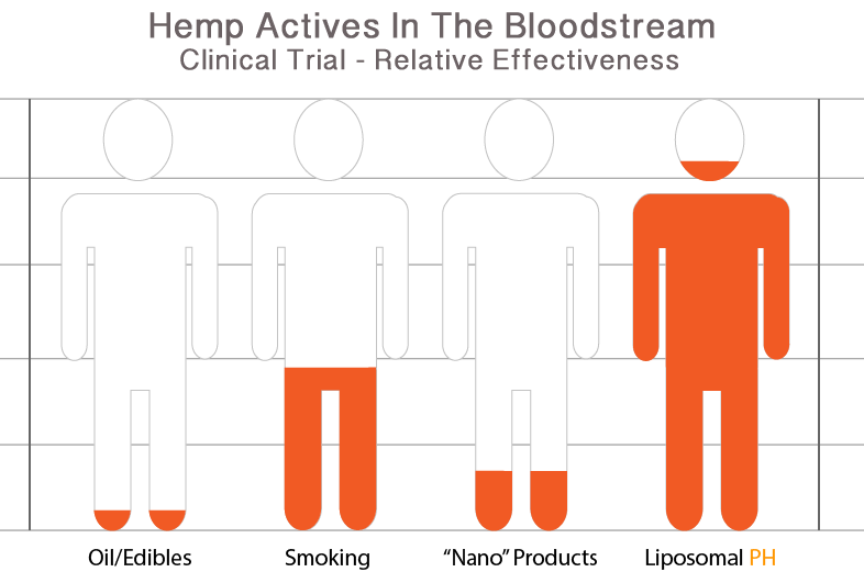 Graphic of hemp actives in the bloodstream